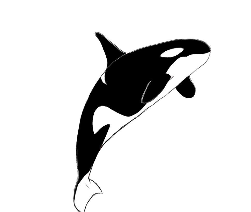 Killer Whale clipart Orca Orca clipart 2 2