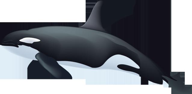 Killer Whale clipart Killer clipart Killer whale clipart