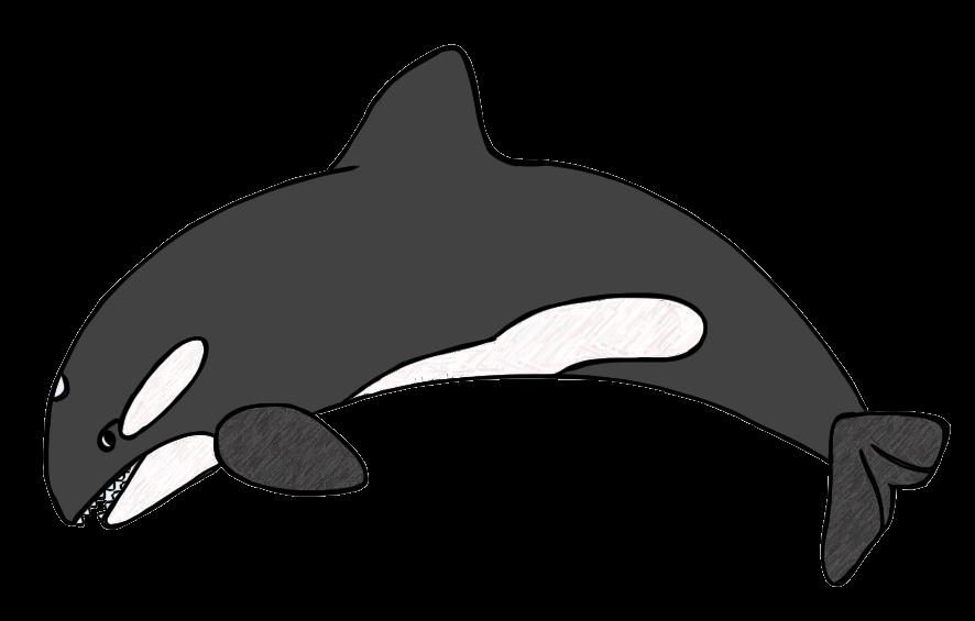 Killer Whale clipart Killer white black whale Clipartix