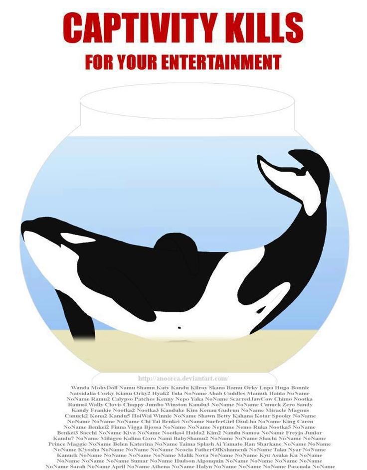 Beluga Whale clipart killer whale Best Set alone Orca at