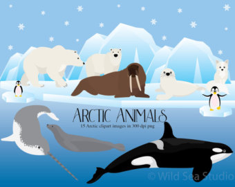 Polar Fox clipart arctic seal Animals seal Etsy Polar sea