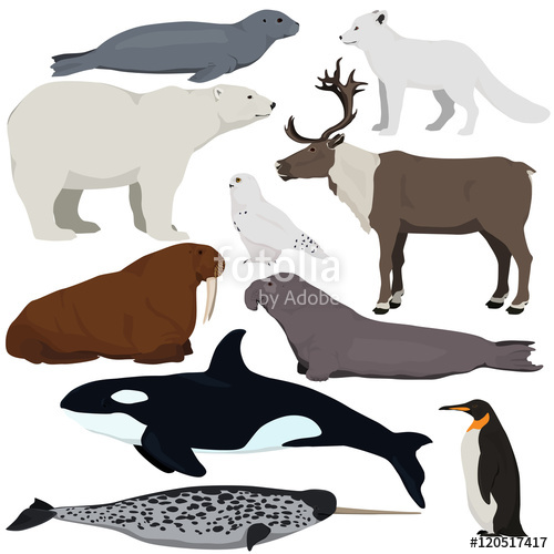 Polar Fox clipart arctic seal Of illustration Set arctic of