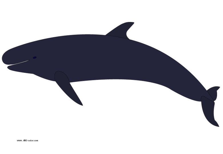 Orca clipart transparent Clip orca Orca fans clipart