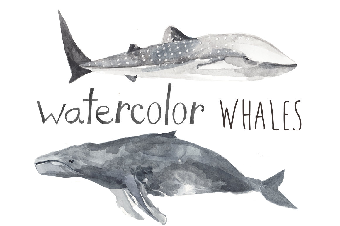 Orca clipart beluga whale Whale is Nautical  Whatercolor