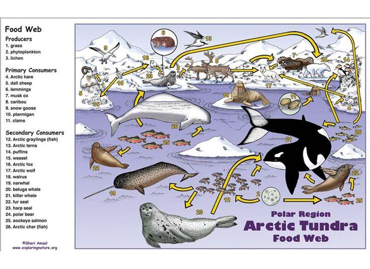 Caribou clipart animal Tundra – Pinterest best Polar