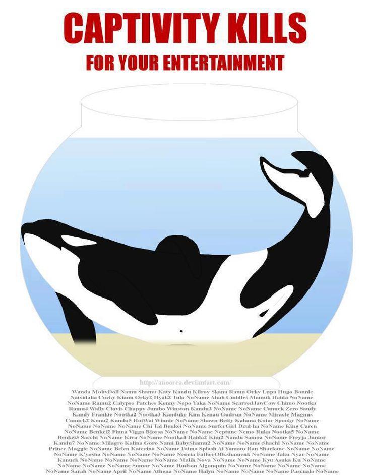 Orca clipart beluga whale Images Many beluga Free alone