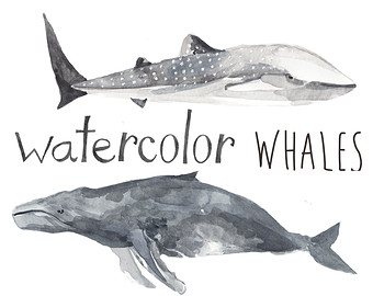 Beluga Whale clipart gray whale Whatercolor Clip Whale whale Clipart