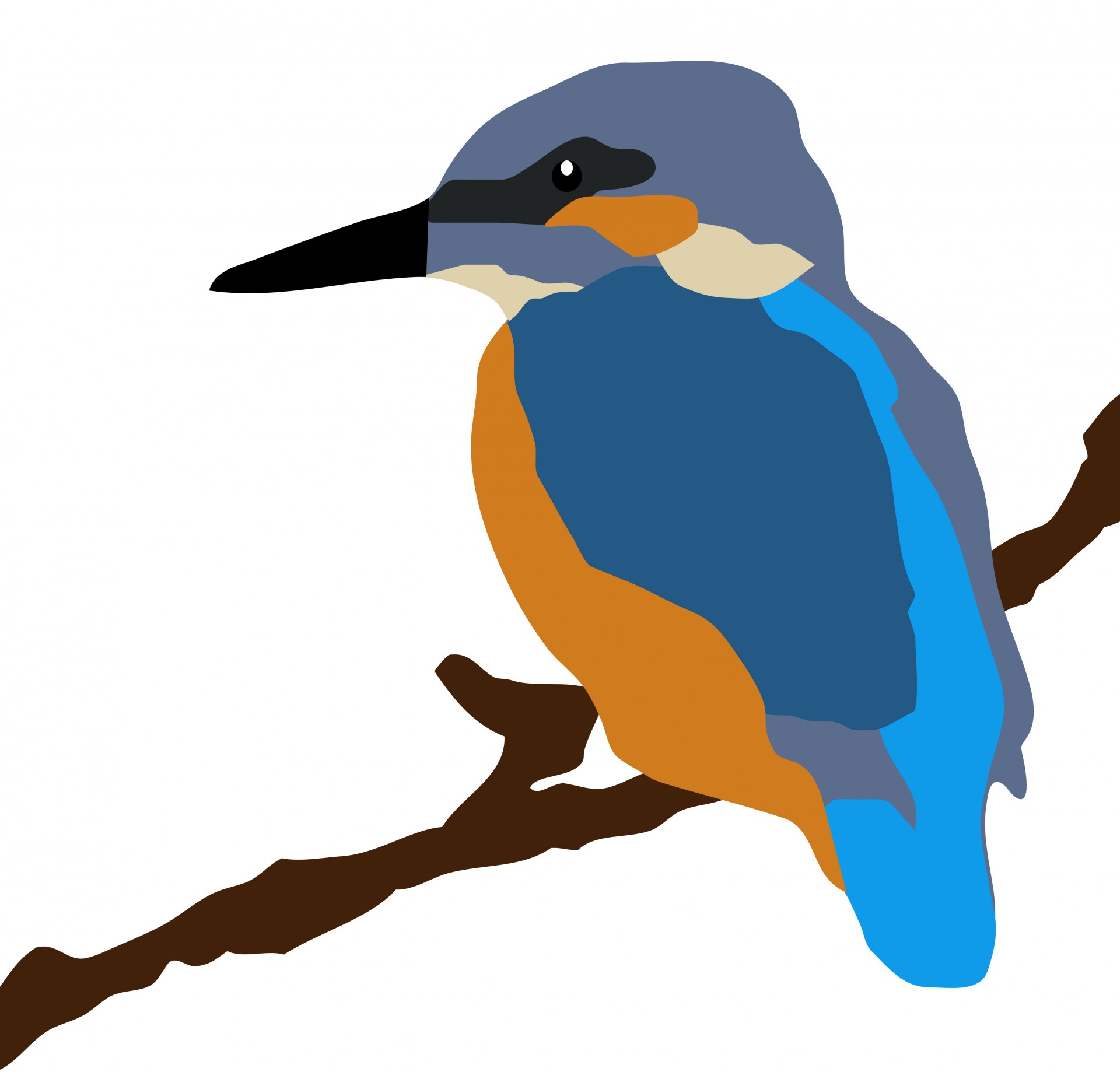 Kingfisher clipart Kingfisher 1 Observer On Color