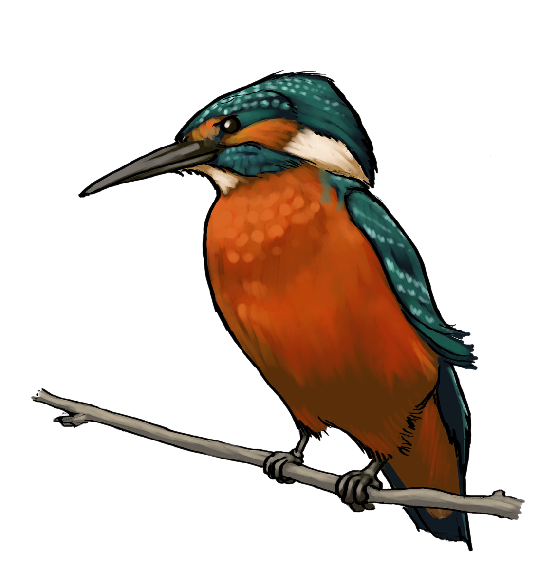 Kingfisher clipart Free Art Kingfisher  Clip