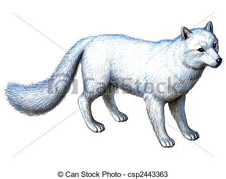 Kinguio clipart Fox Arctic clipart Arctic Download