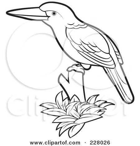 Kingfisher clipart Clipart drawings #9 clipart Kingsfisher