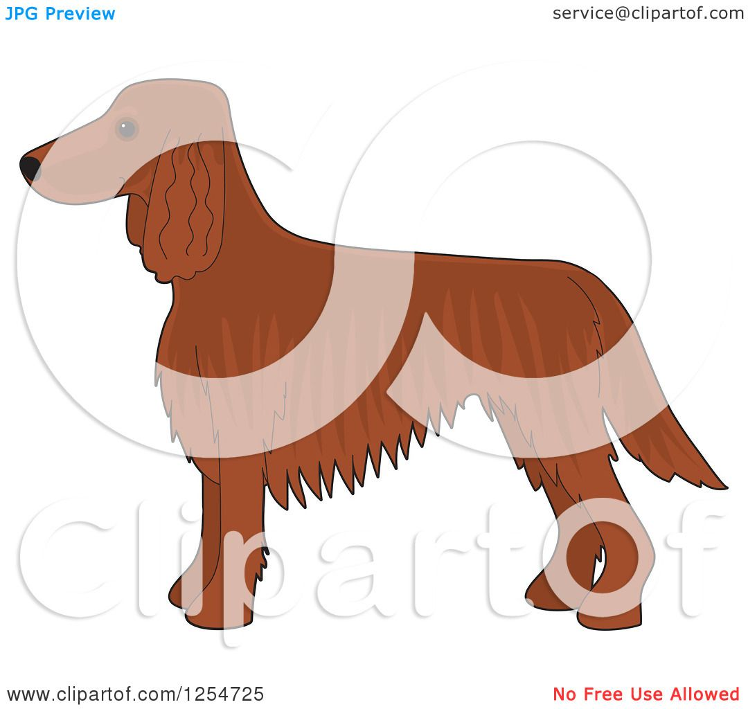 Red Setter clipart haired #4