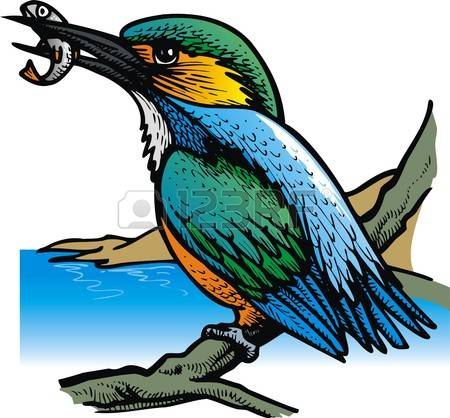 Kingfisher clipart Clipart drawings #7 clipart Kingsfisher