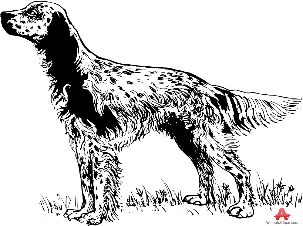 Red Setter clipart dog breed #1