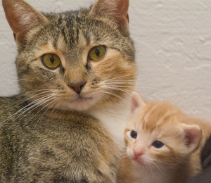 Cat clipart mother and baby Of kittens cat baby with