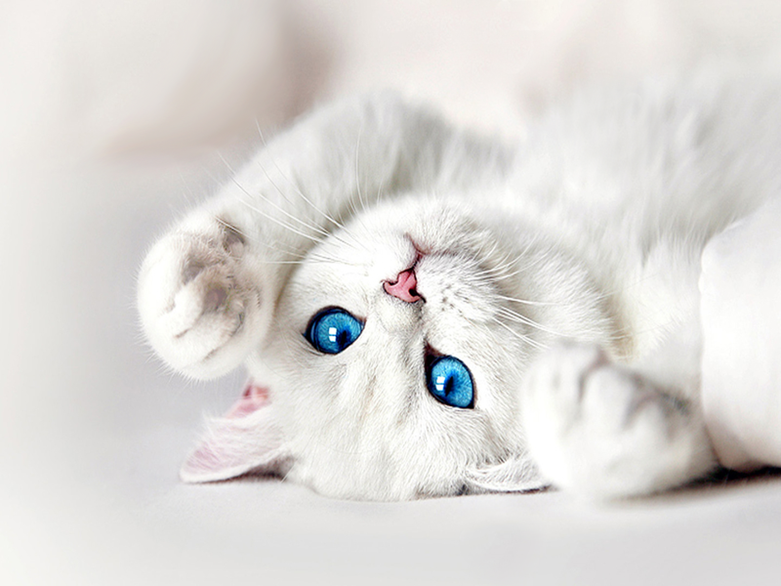 Blue Eyes clipart cute eye Blue Blue + animals Cat