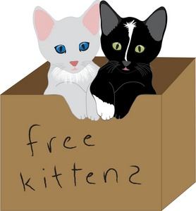 Box clipart cat Kittens  in being a