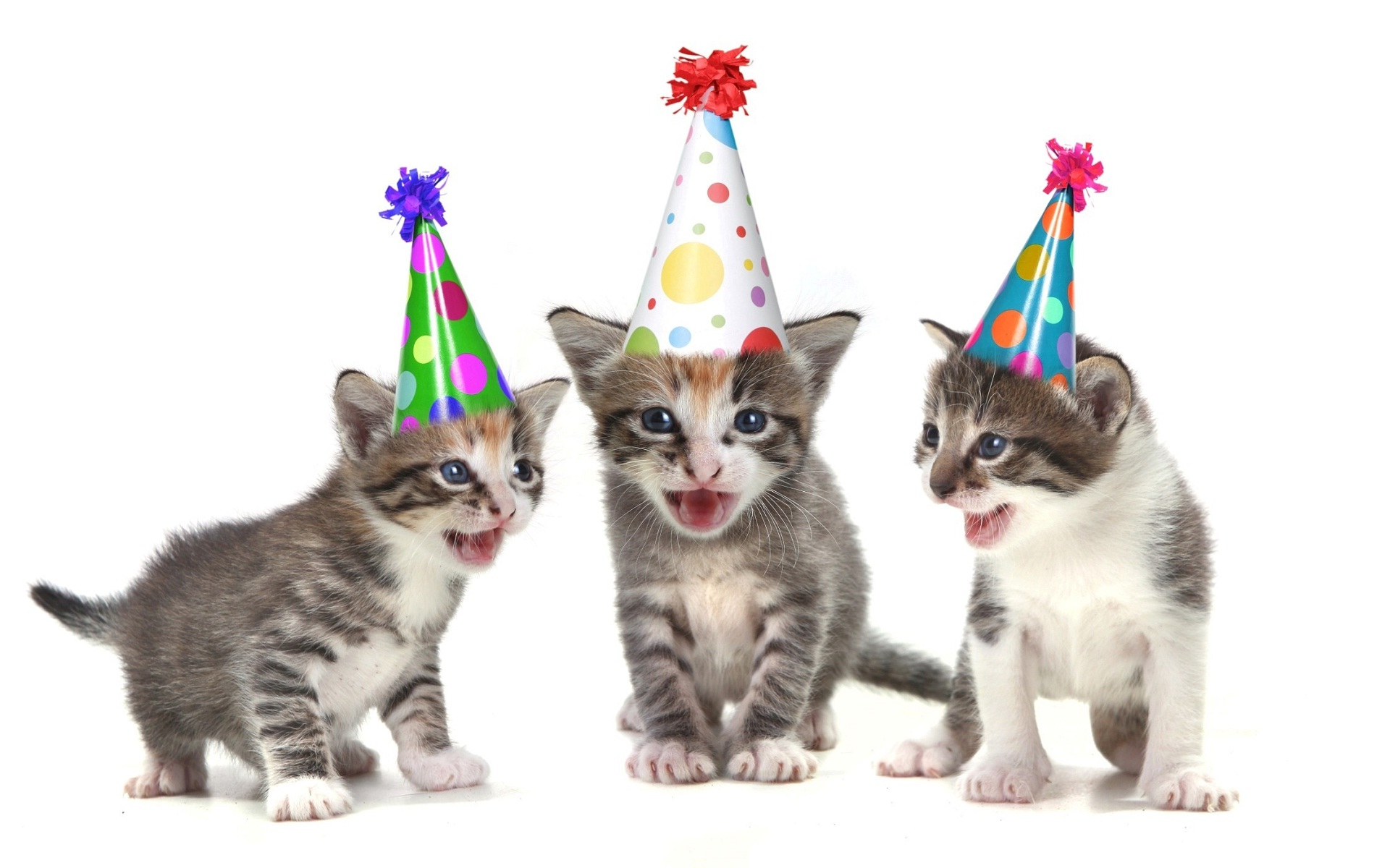 KITTENS clipart funny cat Happy Wishing birthday you Happy