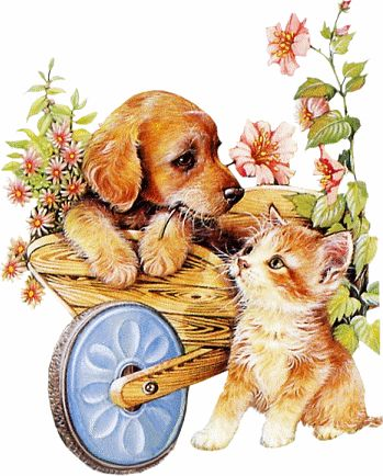 KITTENS clipart pet animal About Find best 865 &