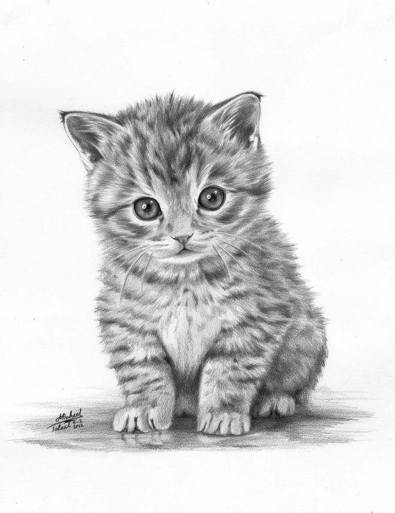 Drawn animal kitten #1