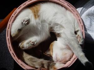 Cat clipart curled Cat curled Cat a cat