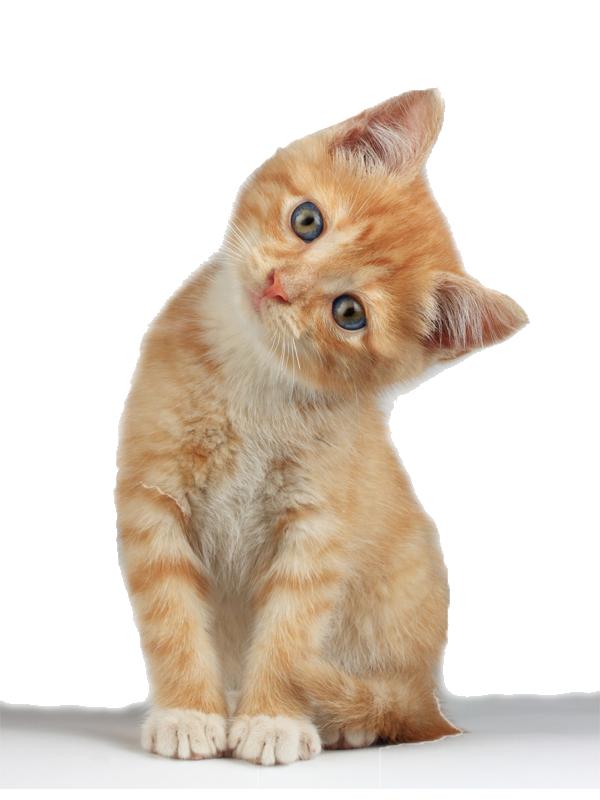 KITTENS clipart transparent background Kitten Advertisement PNG Transparent All