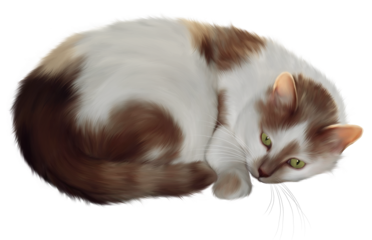 KITTENS clipart transparent background Gallery full View size Yopriceville
