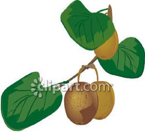 Tree clipart kiwi #1