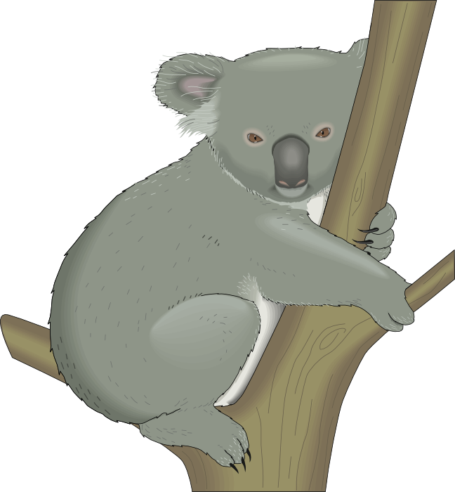 Koala Bear clipart Of a Koalas on Graphics