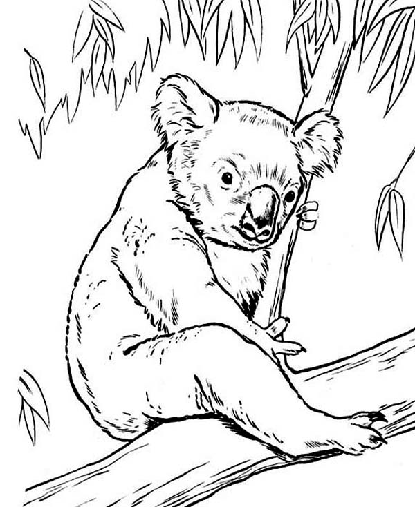 Drawn koala endangered animal #2