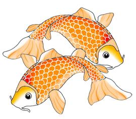 Koi Fish clipart  Drawings fish Fish Colorful