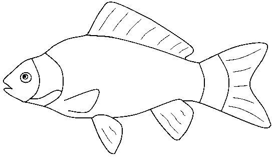 Black & White clipart fish Outline Fish 4 clipart white