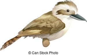 Kookaburra clipart Of royalty free Art and