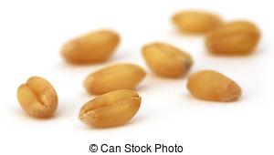 Grain clipart wheat seed 899 Grain  Stock EPS
