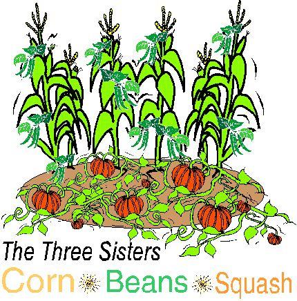 Bean clipart garden plant  images Garden Garden Delights