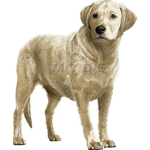 Labrador clipart Clipart Lab Labrador Retriever clip