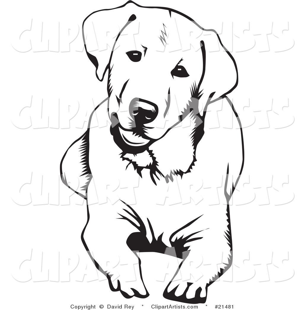Labrador Retriever clipart Dog Down Retriever Labrador And