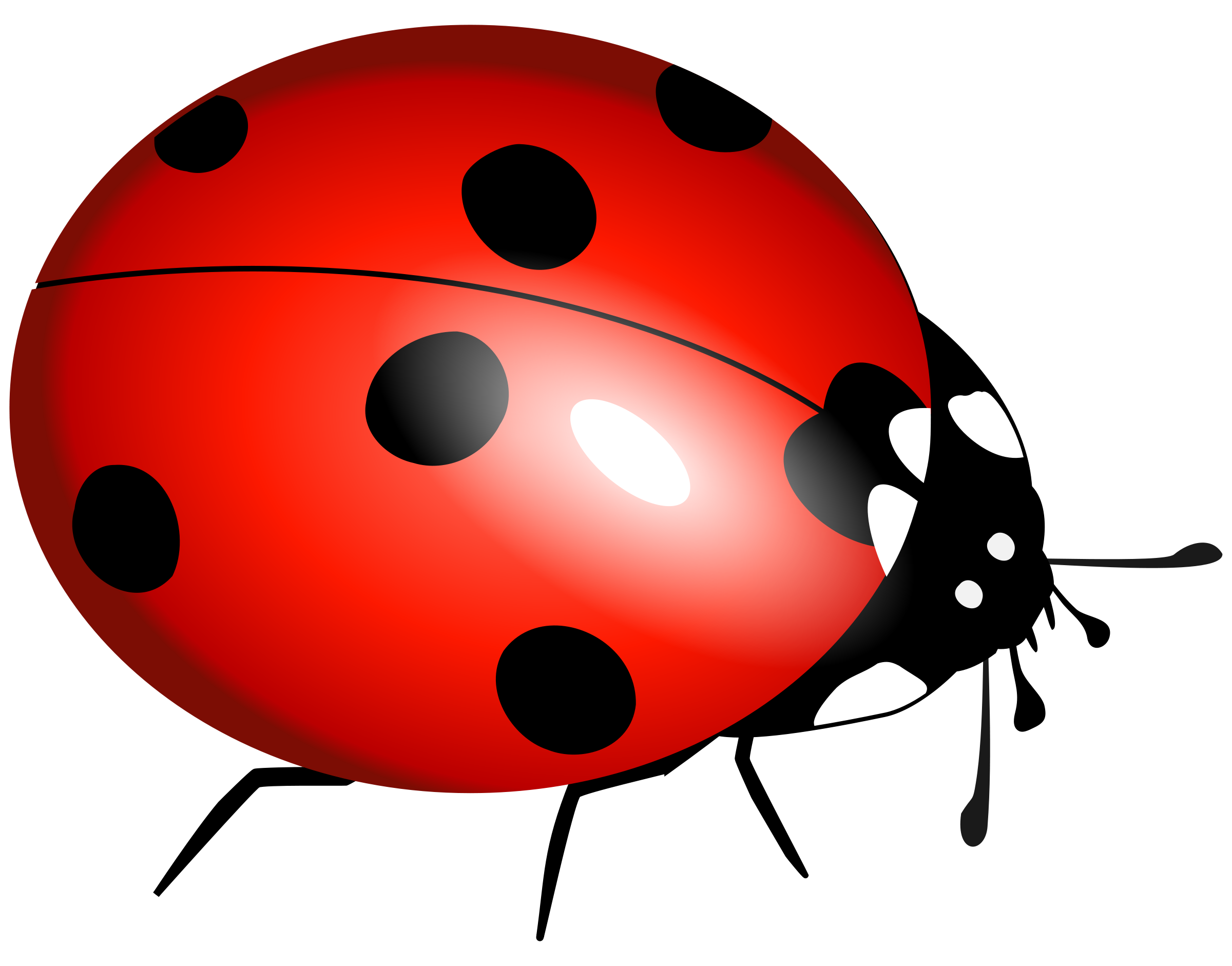 Beelte clipart ladybug Free Ladybug Art image download