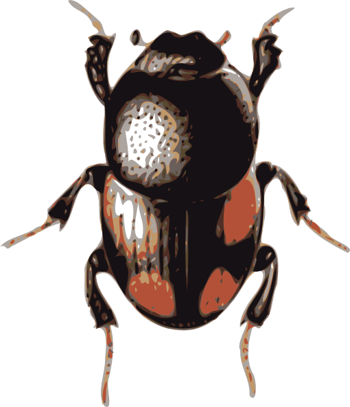 Beetle clipart bettle Clip Beetle art as: Download