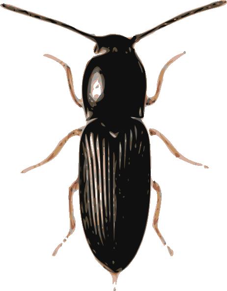 Lady Beetle clipart beatle  Clip Clker art Art