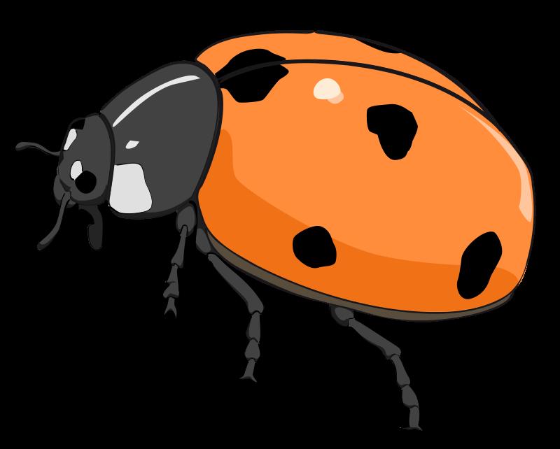 Beelte clipart cute Bug Ladybug bug clip clipart