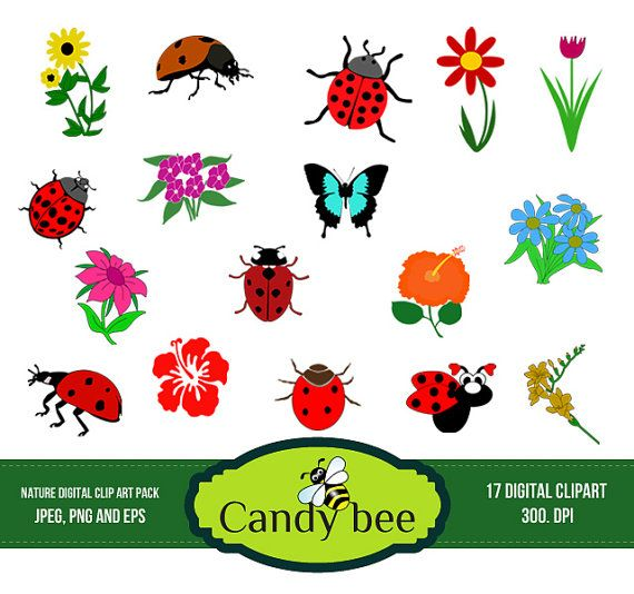 Lady Beetle clipart cute butterfly Flowers Ladybug Insect art images