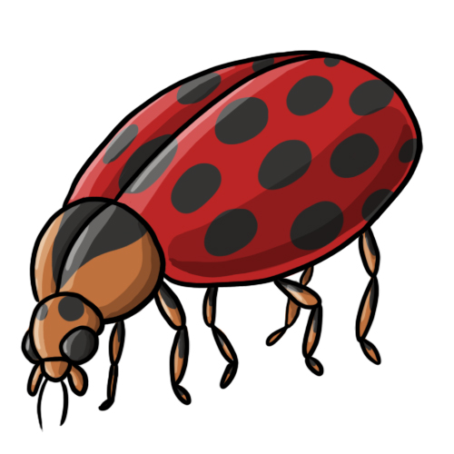 Lady Beetle clipart cute thing Lady 19 Clip Clip Clipart