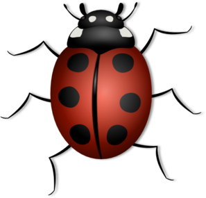 Lady Beetle clipart insect Royalty Clip Bug  clip