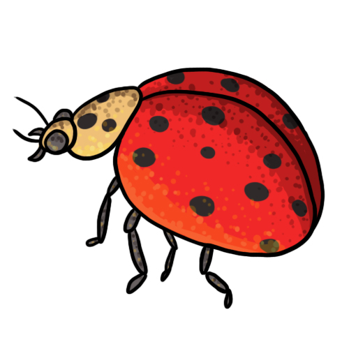 Lady Beetle clipart insect Ladybug clipart Panda Images Free