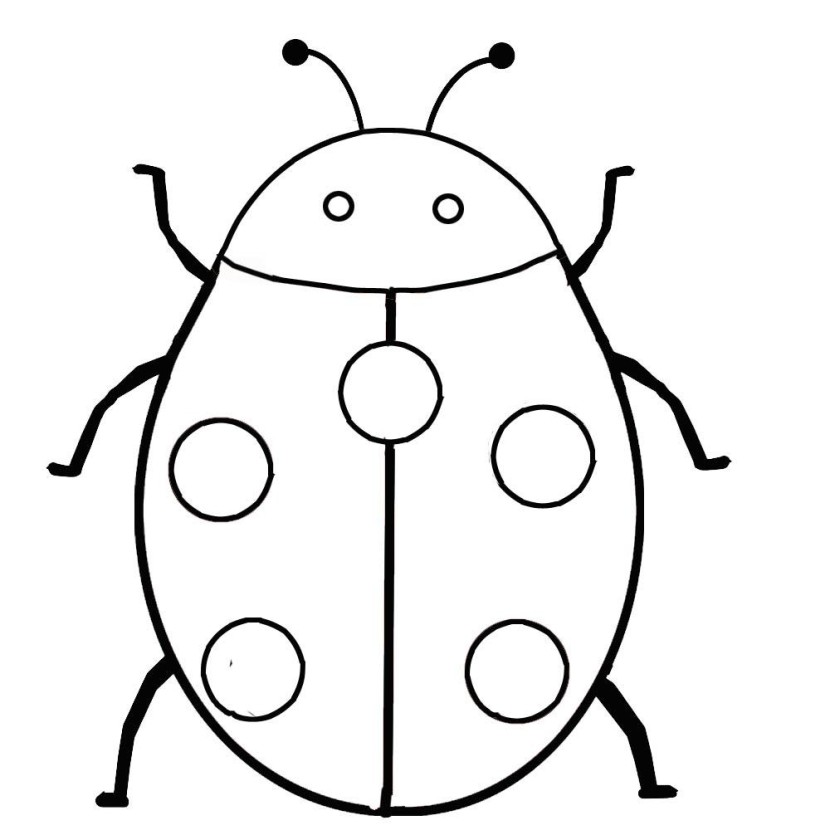 Lady Beetle clipart outline Clip 9 art WikiClipArt Ladybug