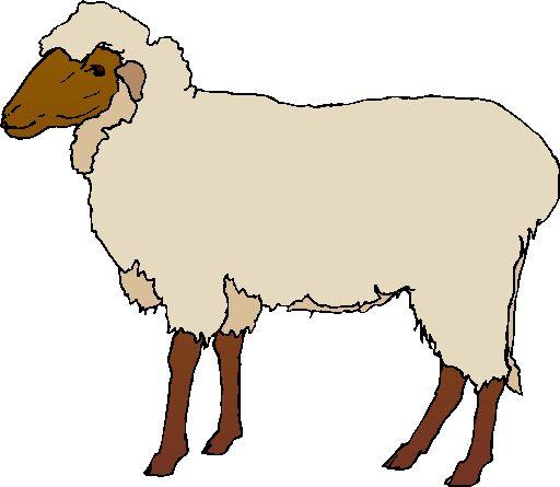 Lamb clipart #11