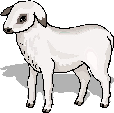 Lamb clipart #13