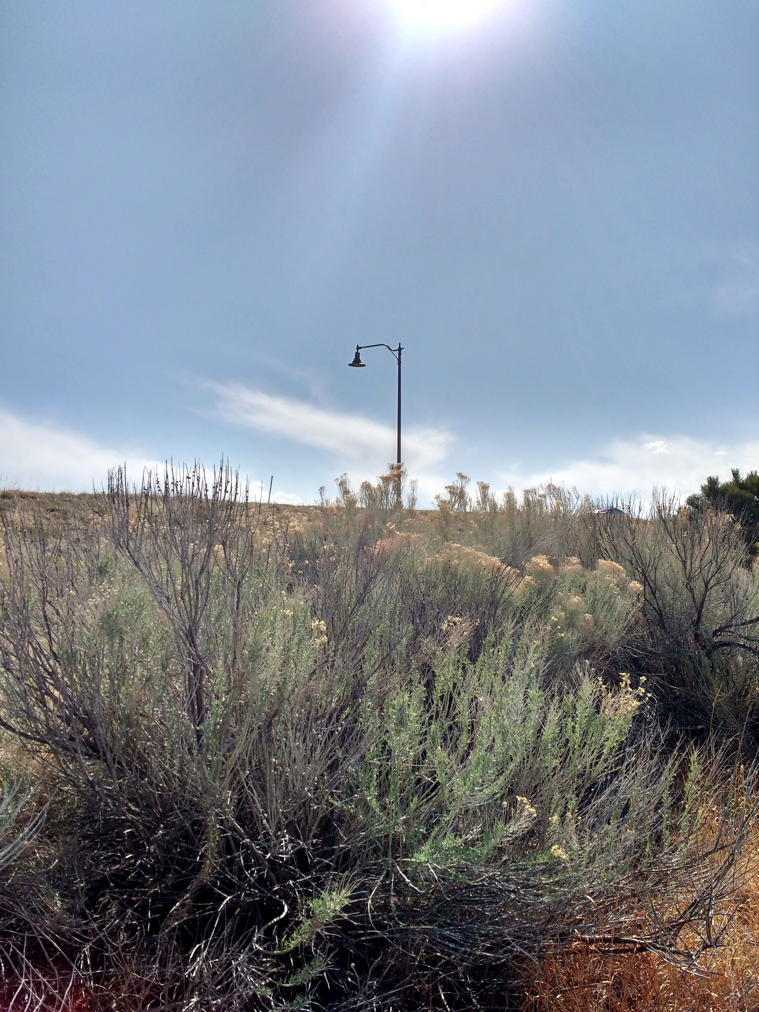 Lamp Post clipart public With Rabbitbrush Public Lamp Plant