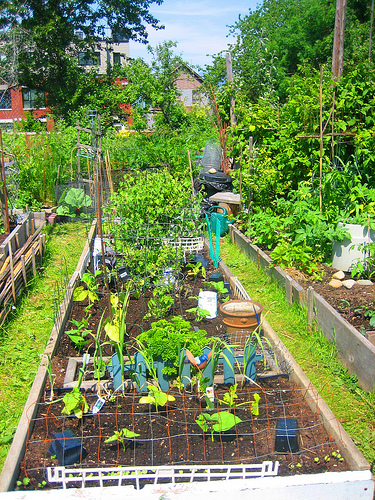 Garden clipart school garden #5